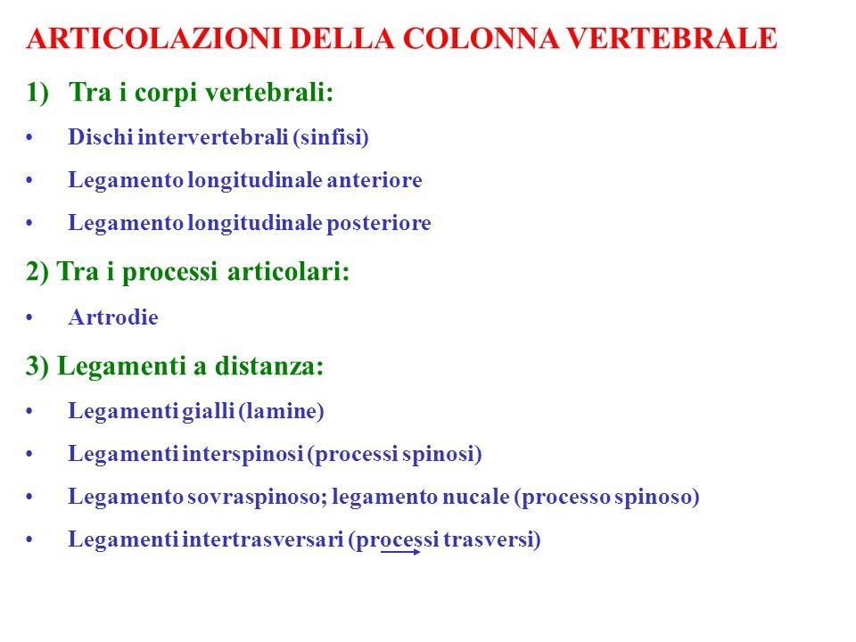 ARTICOLAZIONI DELLA COLONNA VERTEBRALE 1)Tra i corpi vertebrali: Dischi intervertebrali (sinfisi) Legamento longitudinale anteriore Legamento longitud