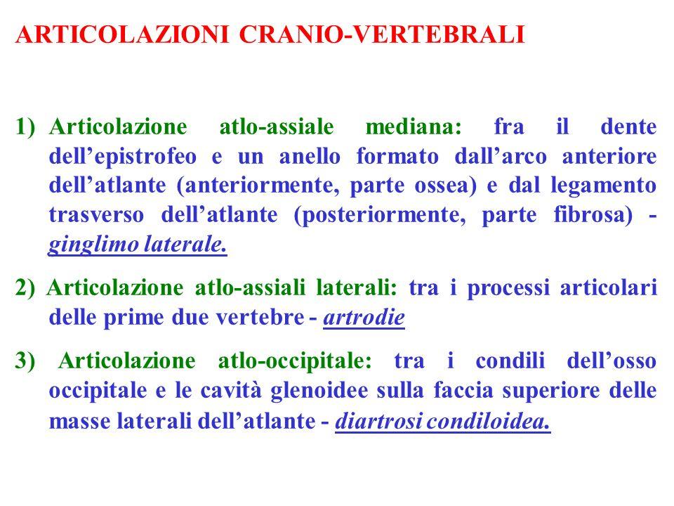 ARTICOLAZIONI CRANIO-VERTEBRALI 1)Articolazione atlo-assiale mediana: fra il dente dellepistrofeo e un anello formato dallarco anteriore dellatlante (