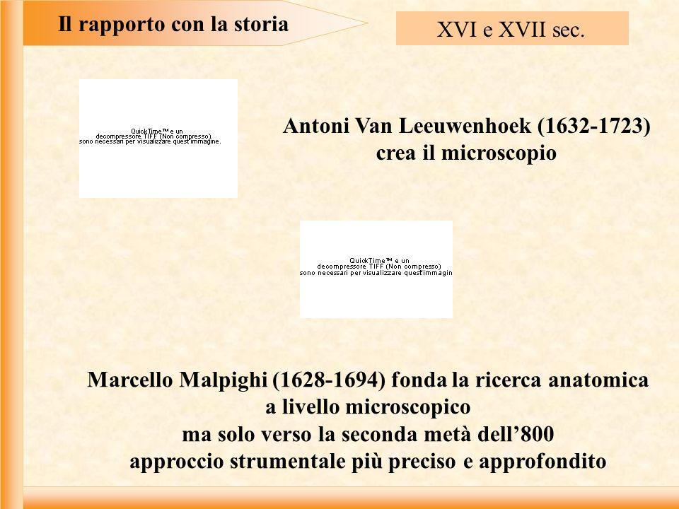Il rapporto con la storia XVI e XVII sec. Antoni Van Leeuwenhoek (1632-1723) crea il microscopio Marcello Malpighi (1628-1694) fonda la ricerca anatom