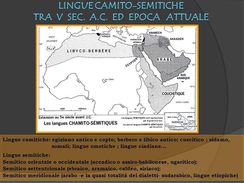 Lingue camitiche: egiziano antico e copto; berbero e libico antico; cuscitico ; sidamo, somali; lingue omotiche ; lingue ciadiane… Lingue semitiche: S