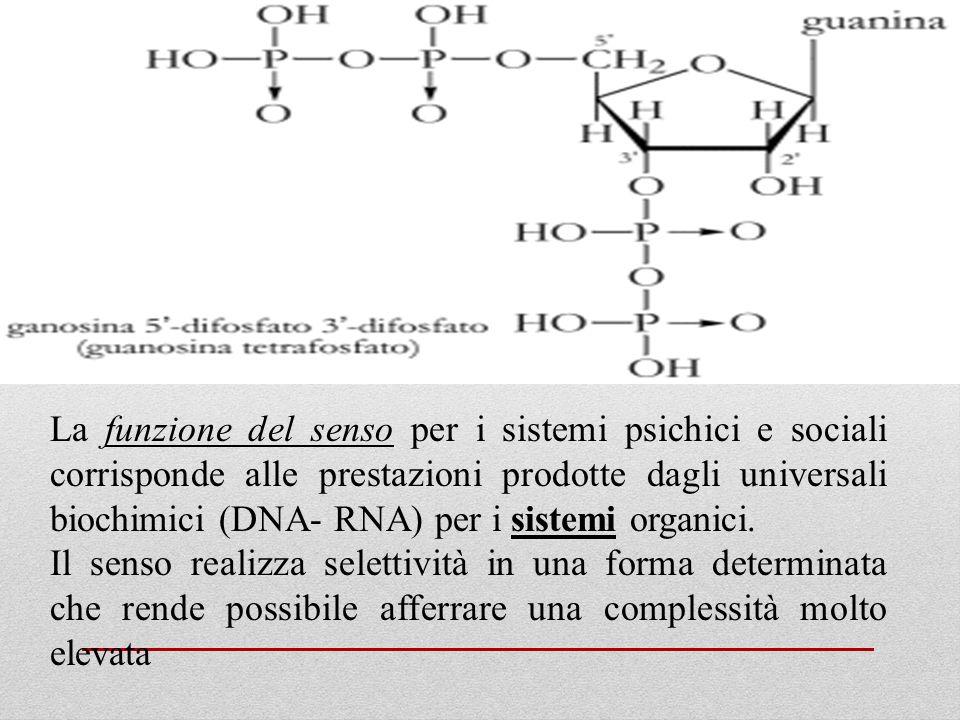 La funzione del senso per i sistemi psichici e sociali corrisponde alle prestazioni prodotte dagli universali biochimici (DNA- RNA) per i sistemi orga