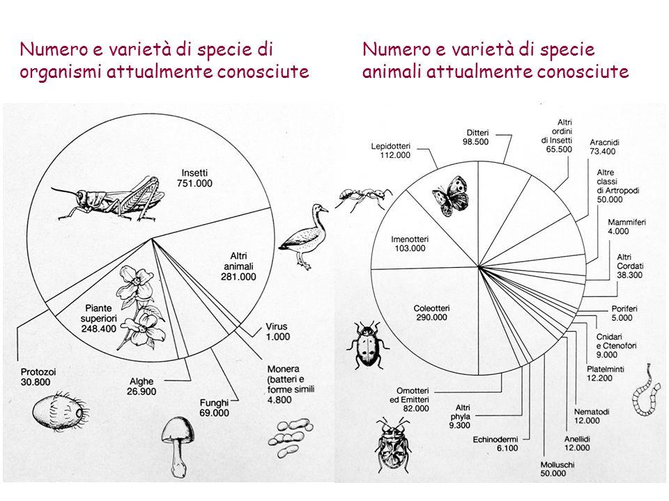 Numero e varietà di specie di organismi attualmente conosciute Numero e varietà di specie animali attualmente conosciute
