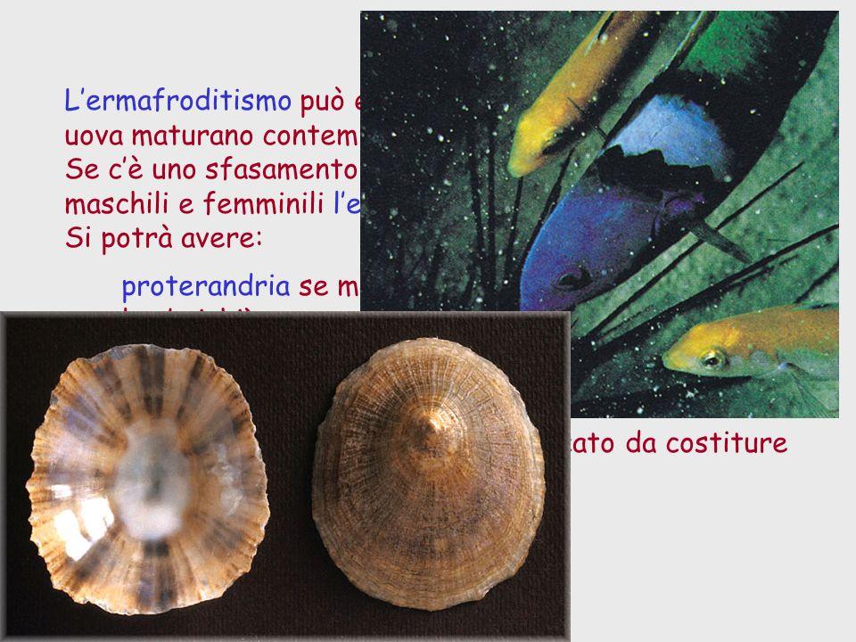 Lermafroditismo può essere simultaneo se spermi e uova maturano contemporaneamente. Se cè uno sfasamento nella maturazione dei gameti maschili e femmi