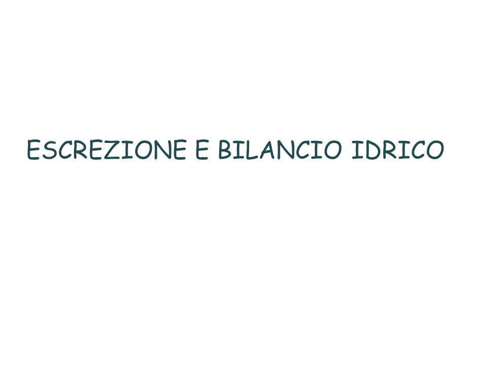 ESCREZIONE E BILANCIO IDRICO