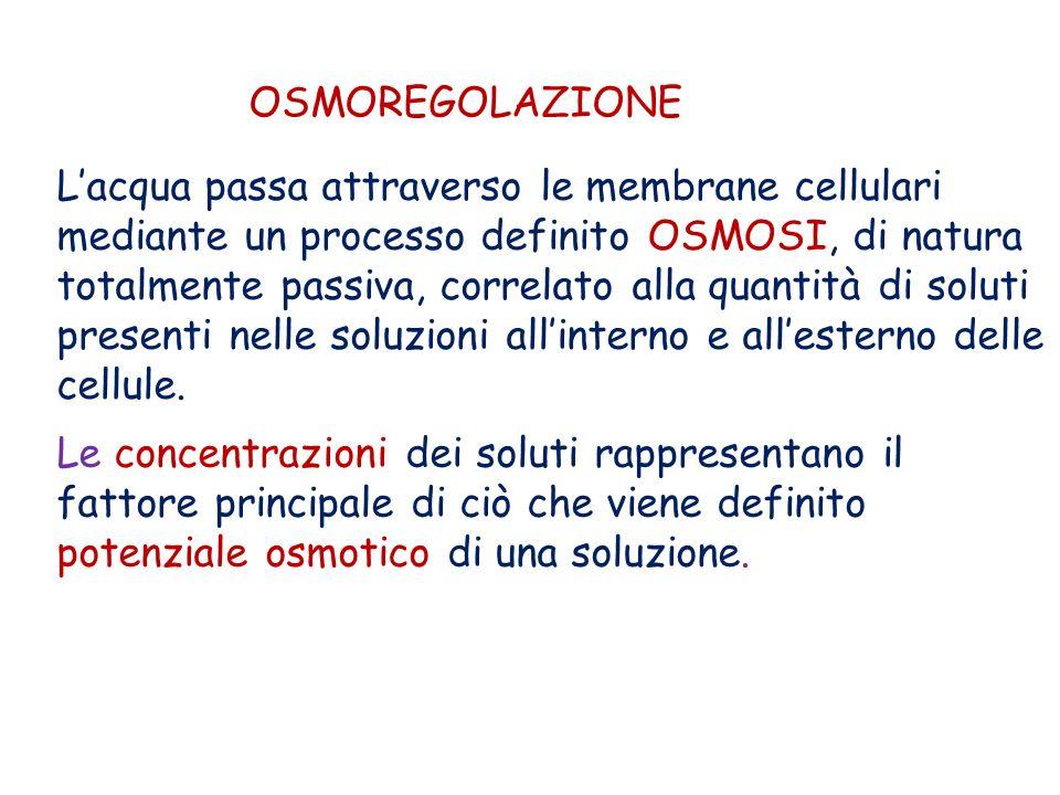 OSMOREGOLAZIONE Lacqua passa attraverso le membrane cellulari mediante un processo definito OSMOSI, di natura totalmente passiva, correlato alla quant