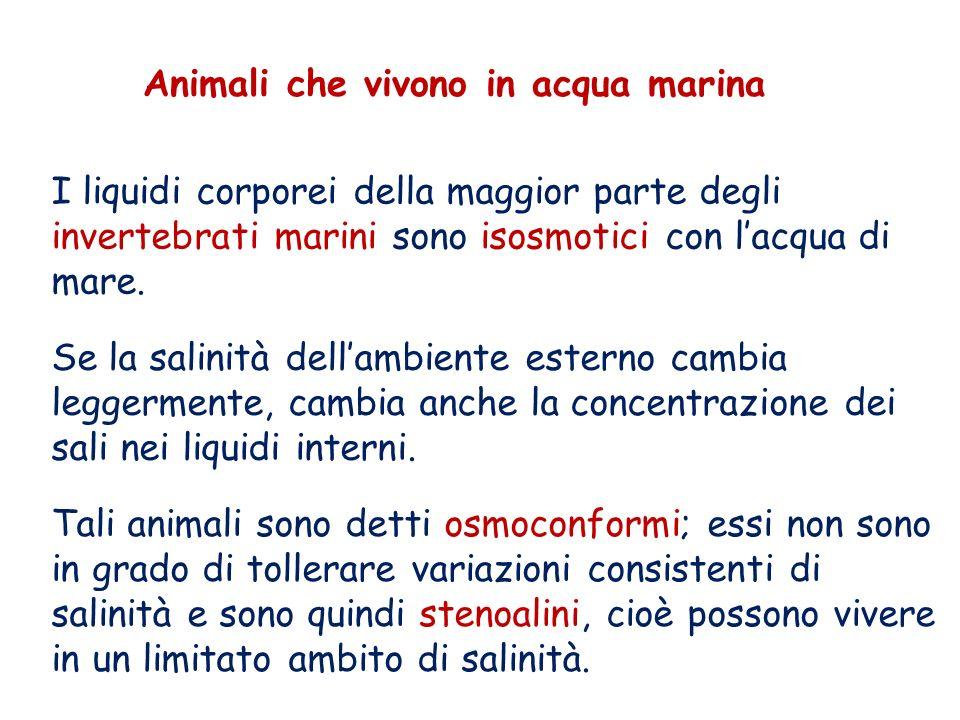 Animali che vivono in acqua marina I liquidi corporei della maggior parte degli invertebrati marini sono isosmotici con lacqua di mare. Se la salinità