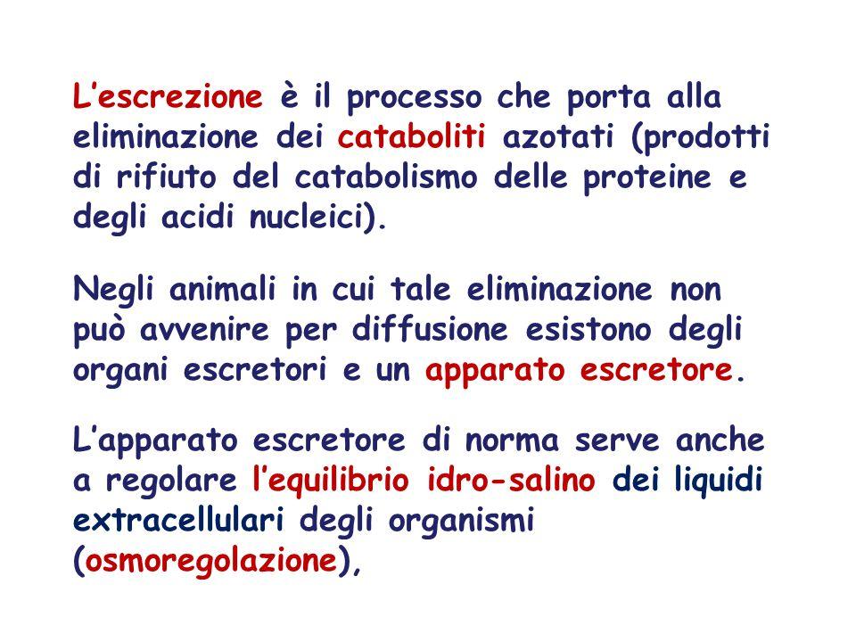 Lescrezione è il processo che porta alla eliminazione dei cataboliti azotati (prodotti di rifiuto del catabolismo delle proteine e degli acidi nucleic