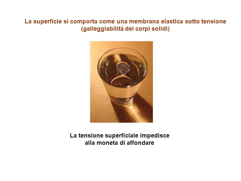 La superficie si comporta come una membrana elastica sotto tensione (galleggiabilità dei corpi solidi) La tensione superficiale impedisce alla moneta di affondare