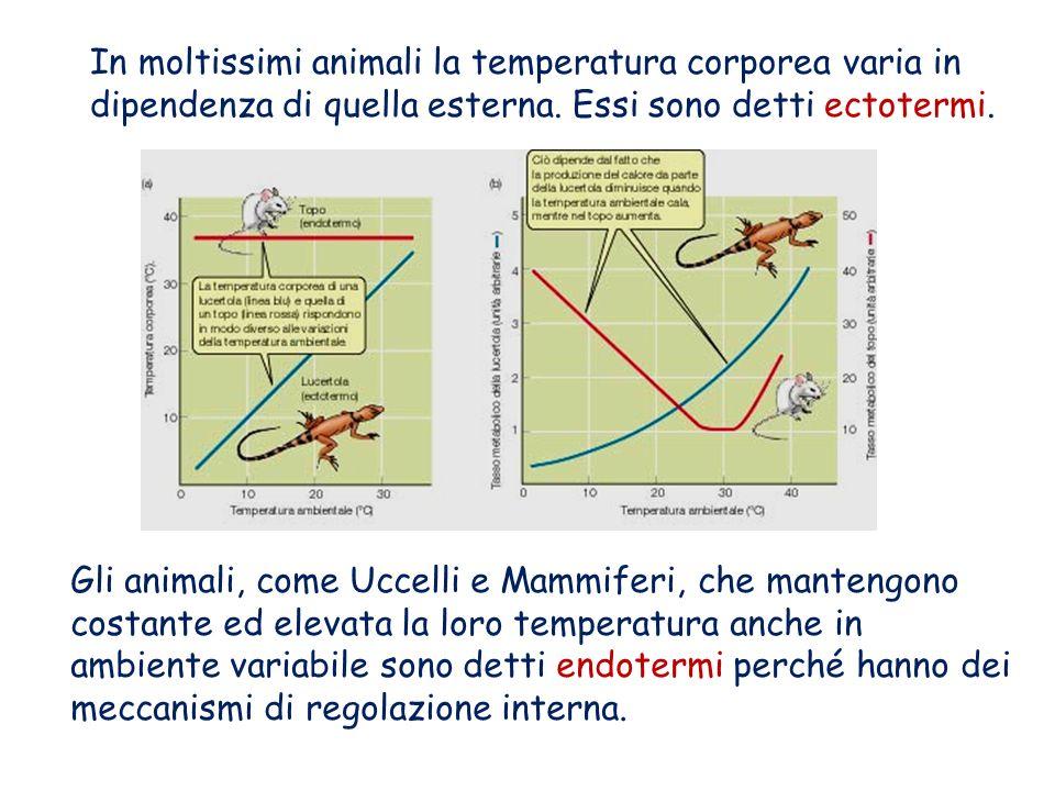 Un esempio di omeostasi: la termoregolazione. Perché un animale possa vivere, la temperatura delle sue cellule non può variare oltre certi limiti ( 0°