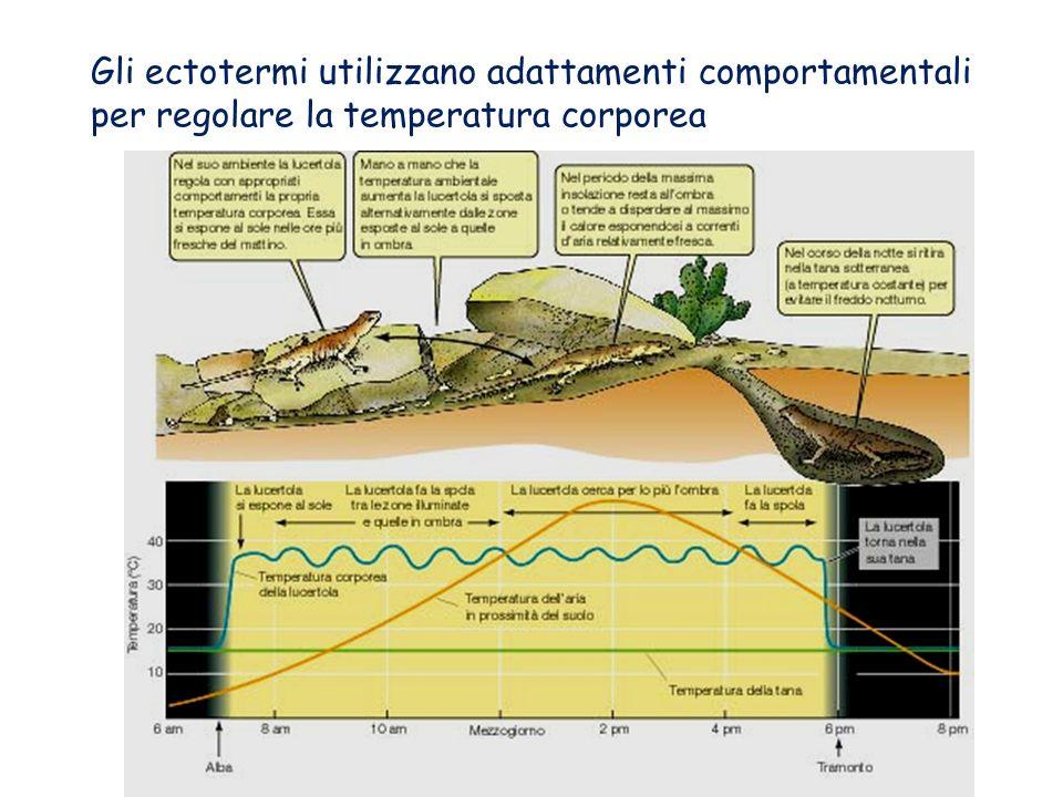 In moltissimi animali la temperatura corporea varia in dipendenza di quella esterna. Essi sono detti ectotermi. Gli animali, come Uccelli e Mammiferi,