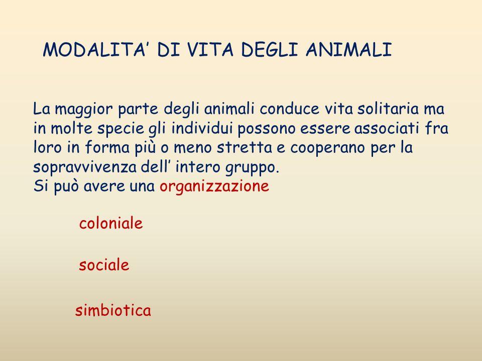 La maggior parte degli animali conduce vita solitaria ma in molte specie gli individui possono essere associati fra loro in forma più o meno stretta e
