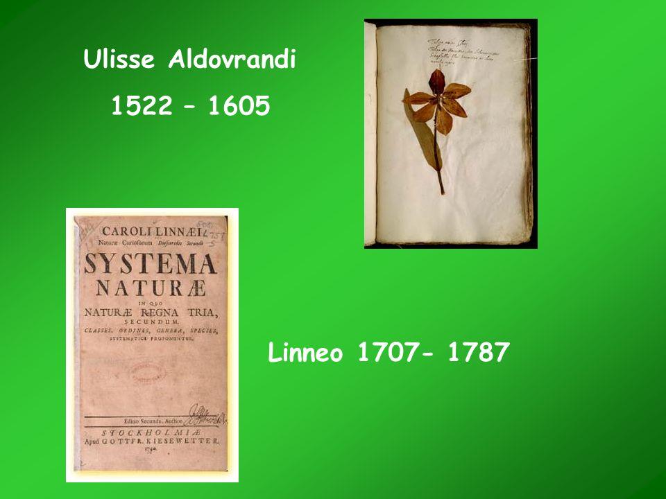 Ulisse Aldovrandi 1522 – 1605 Linneo 1707- 1787