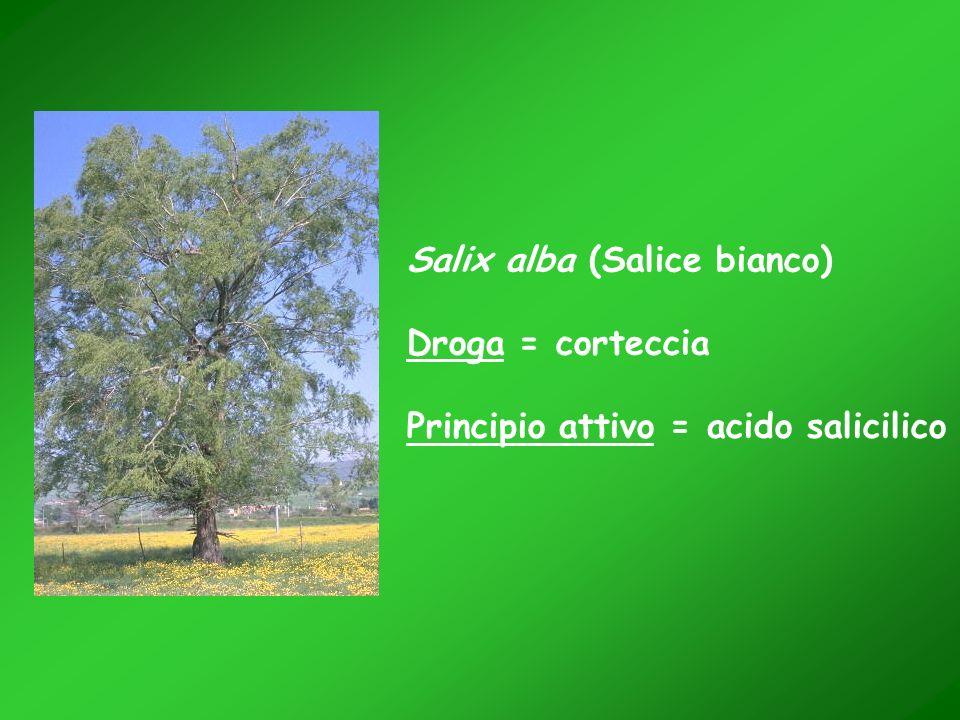 Salix alba (Salice bianco) Droga = corteccia Principio attivo = acido salicilico