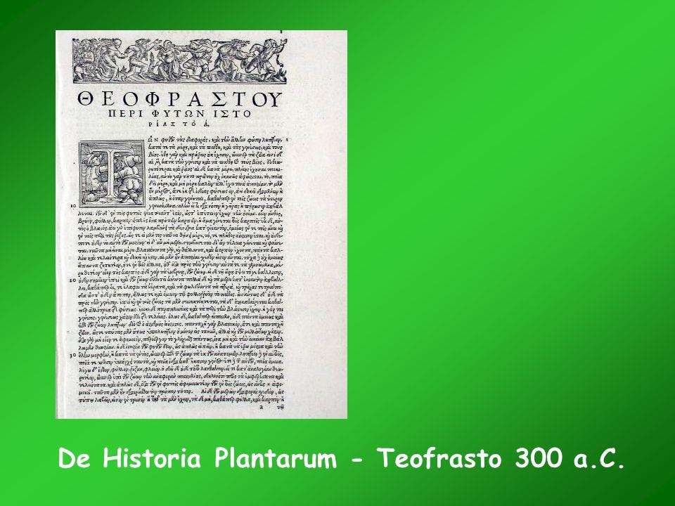 De Historia Plantarum - Teofrasto 300 a.C.