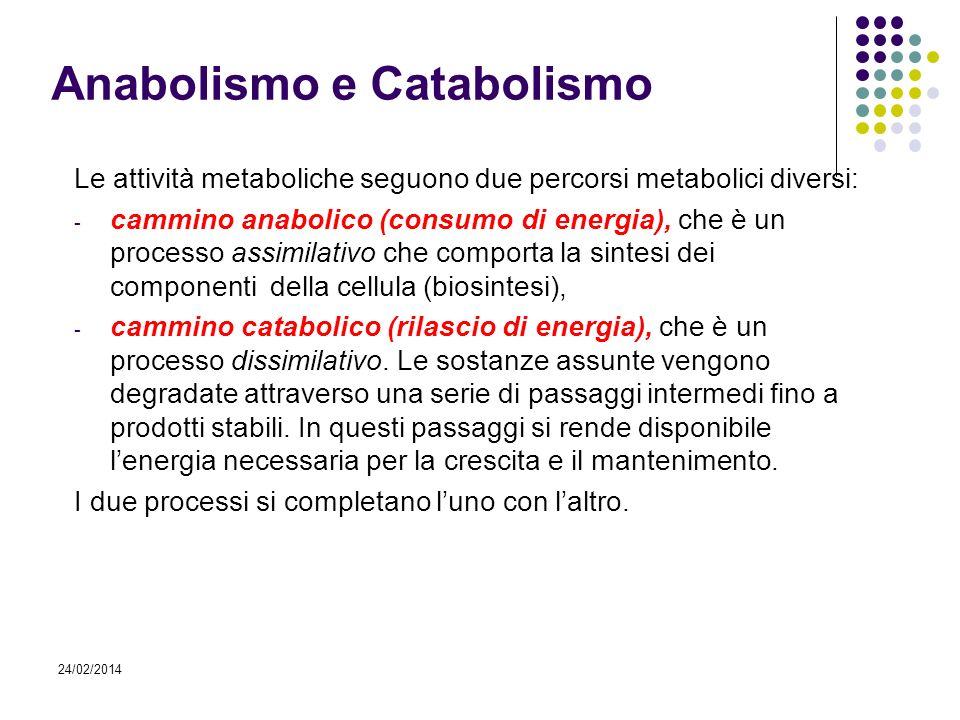 24/02/2014 Anabolismo e Catabolismo Le attività metaboliche seguono due percorsi metabolici diversi: - cammino anabolico (consumo di energia), che è u