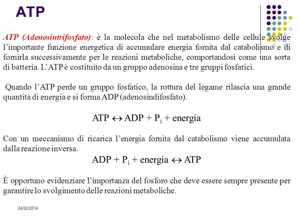 24/02/2014 ATP ATP (Adenosintrifosfato): è la molecola che nel metabolismo delle cellule svolge limportante funzione energetica di accumulare energia