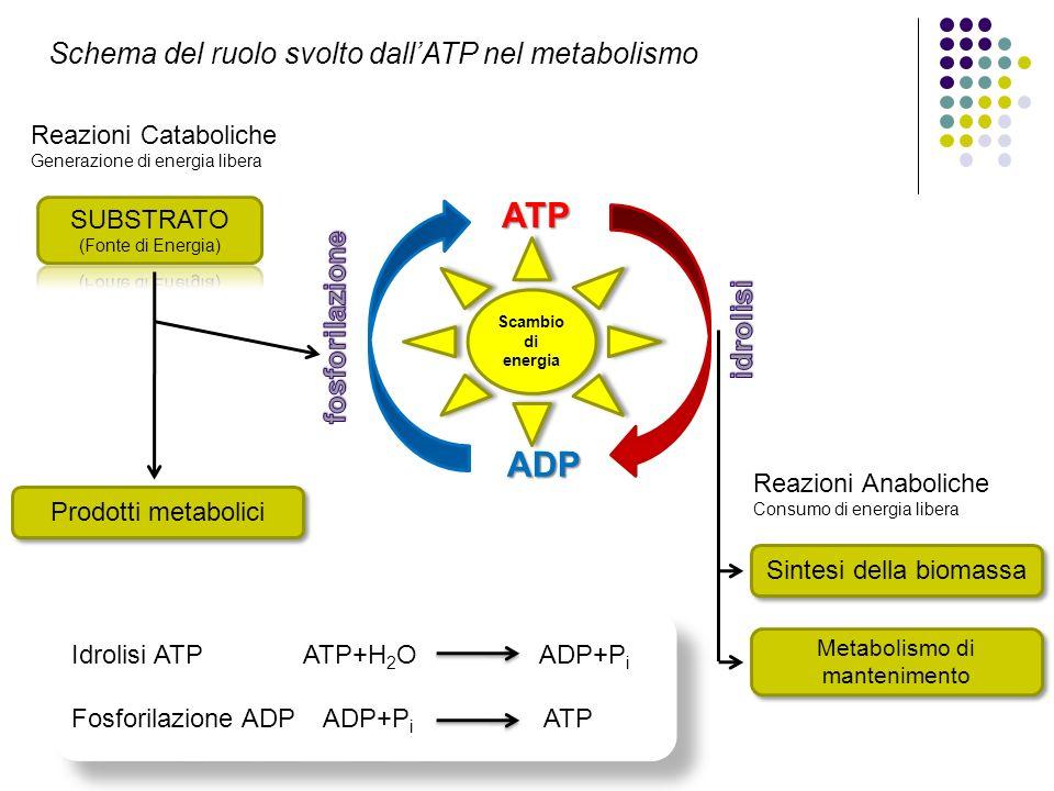 24/02/2014 ATP ADP Reazioni Cataboliche Generazione di energia libera Prodotti metabolici Reazioni Anaboliche Consumo di energia libera Sintesi della