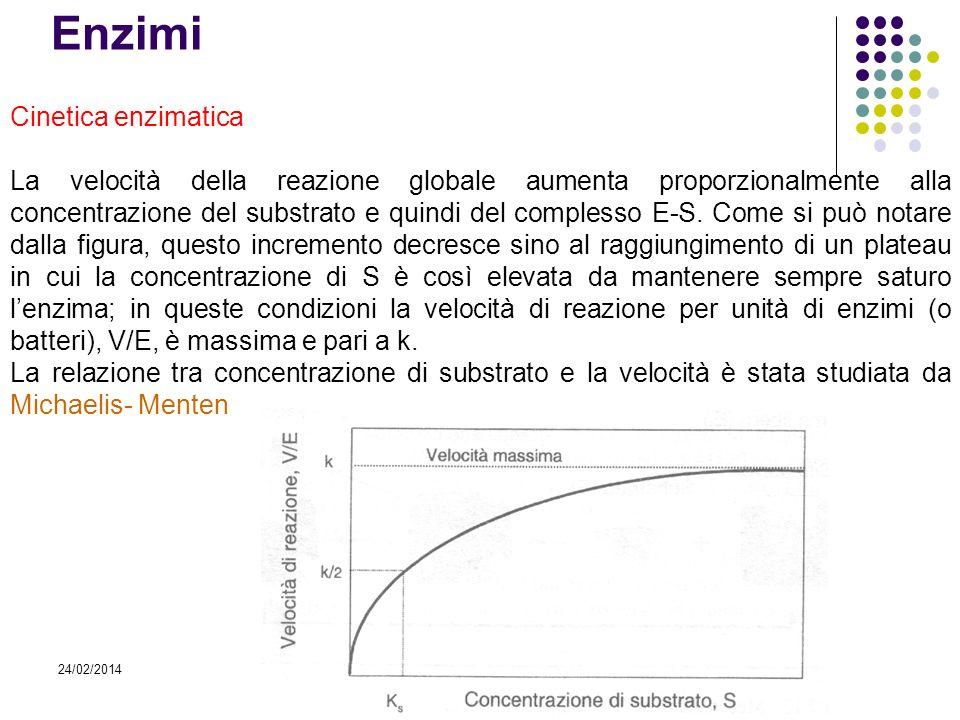 24/02/2014 Enzimi Cinetica enzimatica La velocità della reazione globale aumenta proporzionalmente alla concentrazione del substrato e quindi del comp