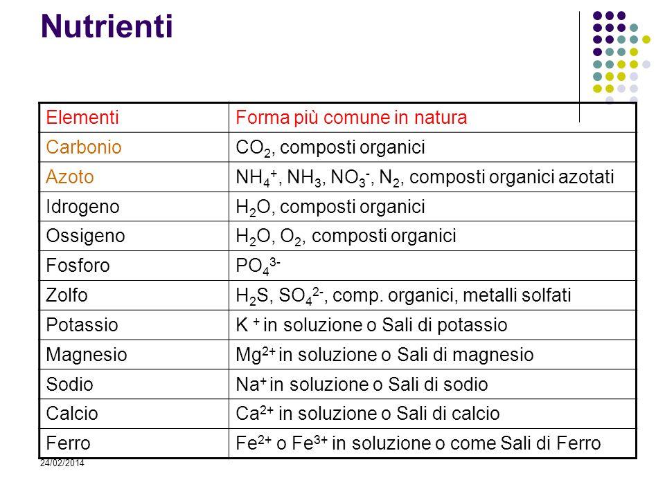 24/02/2014 Nutrienti ElementiForma più comune in natura CarbonioCO 2, composti organici AzotoNH 4 +, NH 3, NO 3 -, N 2, composti organici azotati Idro