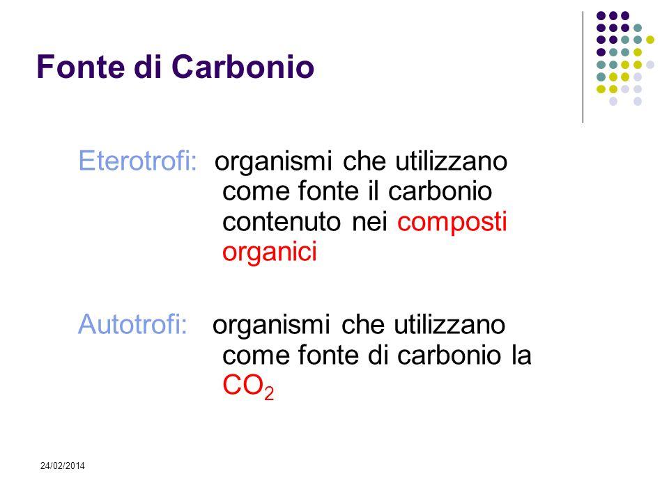 24/02/2014 Fonte di Carbonio Eterotrofi: organismi che utilizzano come fonte il carbonio contenuto nei composti organici Autotrofi: organismi che util