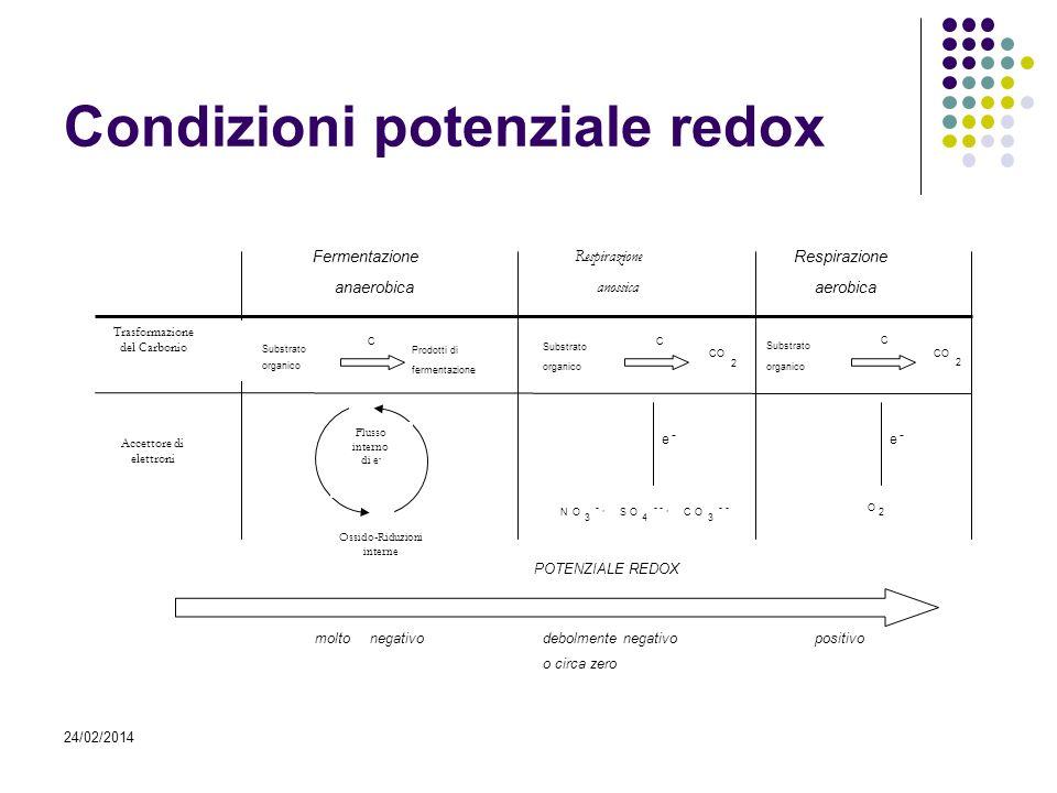 24/02/2014 Condizioni potenziale redox CO 2 Substrato organico C NO 3 -, SO 4 --, CO 3 -- Respirazione anossica O 2 Respirazione aerobica Fermentazion