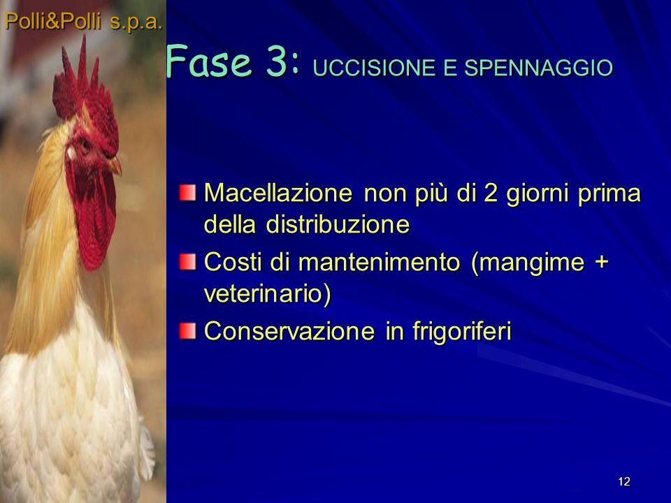 12 Macellazione non più di 2 giorni prima della distribuzione Costi di mantenimento (mangime + veterinario) Conservazione in frigoriferi Fase 3: UCCISIONE E SPENNAGGIO Polli&Polli s.p.a.