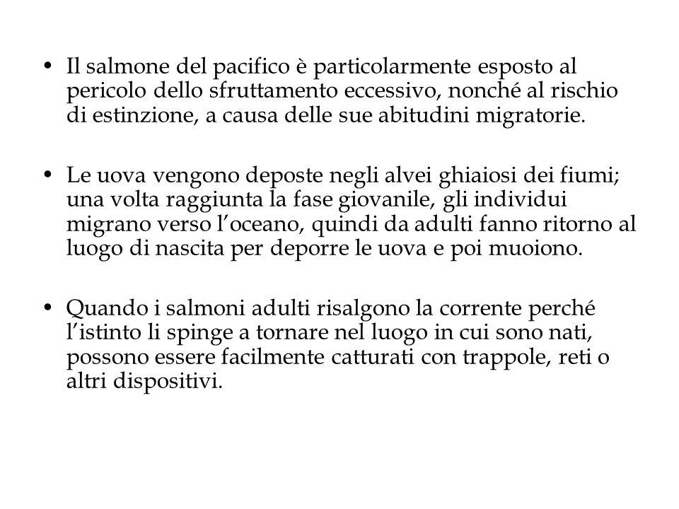 Il salmone del pacifico è particolarmente esposto al pericolo dello sfruttamento eccessivo, nonché al rischio di estinzione, a causa delle sue abitudini migratorie.