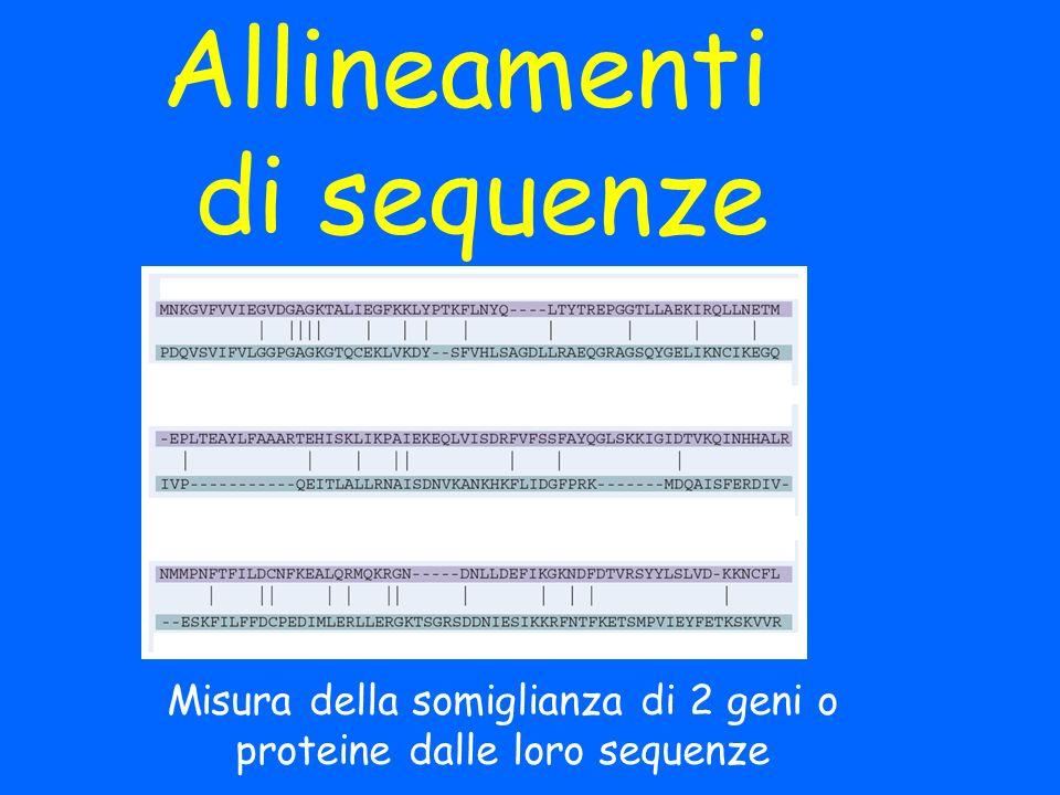Allineamenti di sequenze Misura della somiglianza di 2 geni o proteine dalle loro sequenze