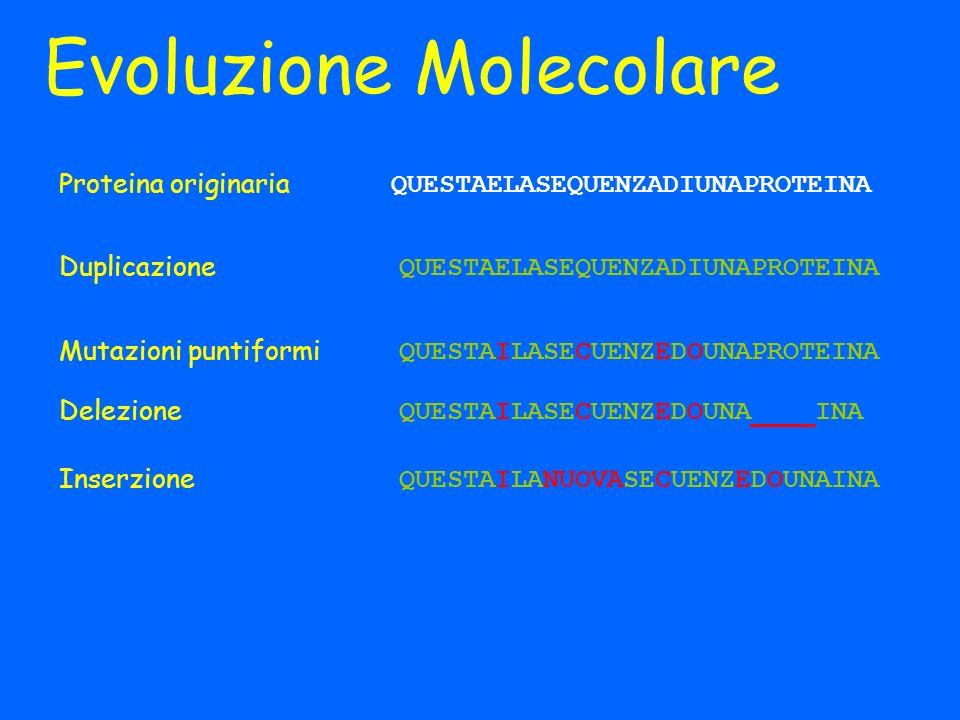 Evoluzione Molecolare QUESTAELASEQUENZADIUNAPROTEINA Duplicazione QUESTAELASEQUENZADIUNAPROTEINA Mutazioni puntiformi QUESTAILASECUENZEDOUNAPROTEINA D