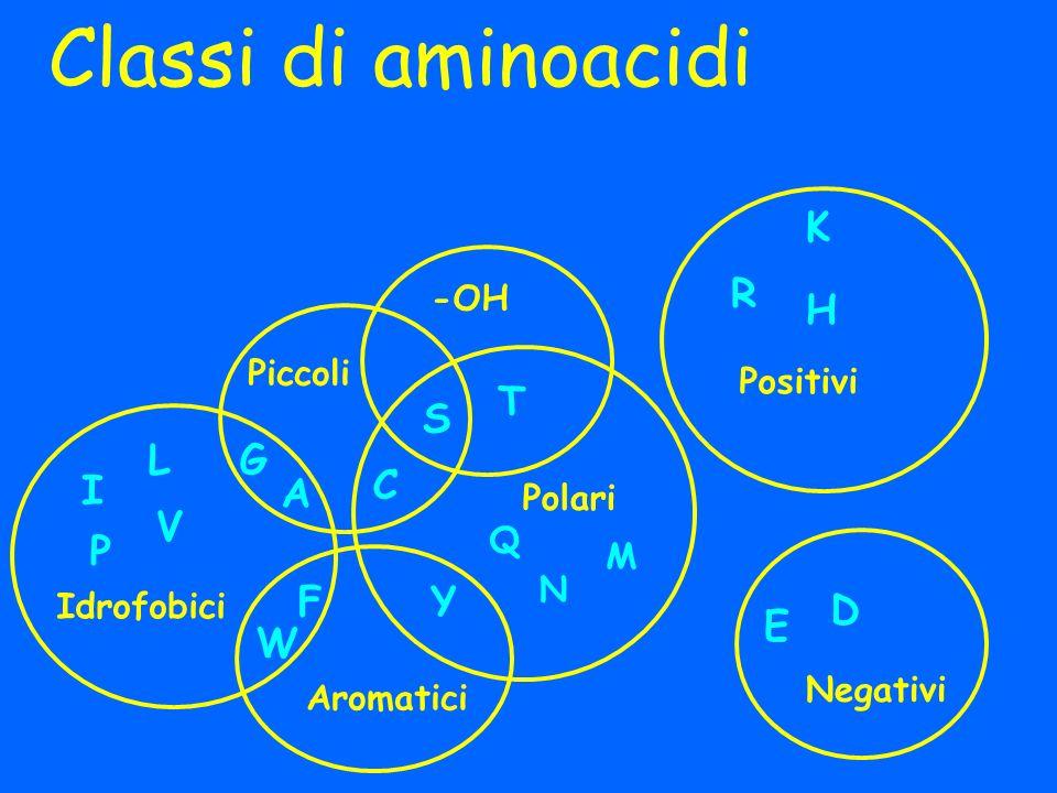 Classi di aminoacidi I L V G A E D FY W K H C P Idrofobici Polari Positivi R S T Aromatici Negativi Piccoli Q N -OH M