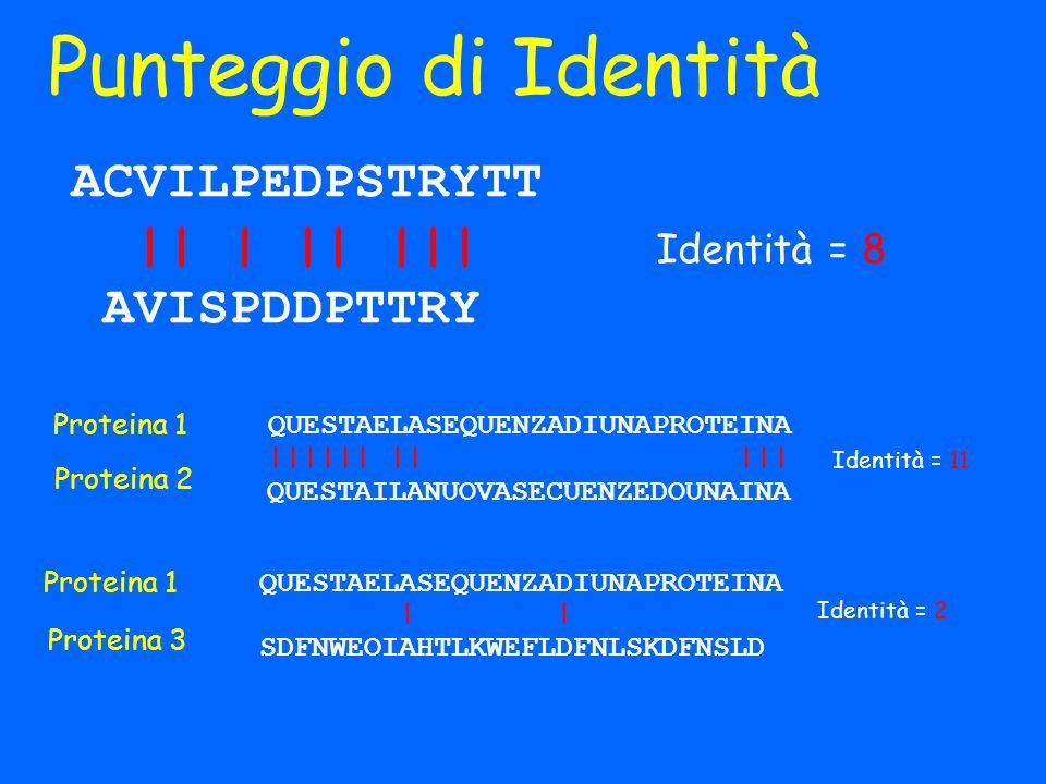 Punteggio di Identità Identità = 8 ACVILPEDPSTRYTT || | || ||| AVISPDDPTTRY QUESTAELASEQUENZADIUNAPROTEINA |||||| || ||| QUESTAILANUOVASECUENZEDOUNAIN