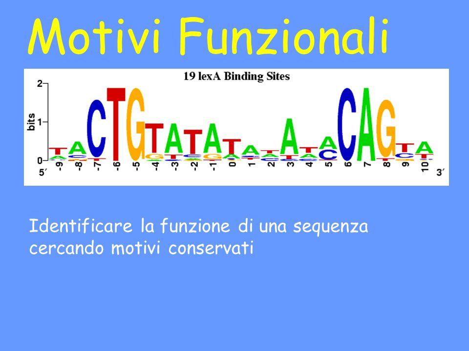 Motivi Funzionali Identificare la funzione di una sequenza cercando motivi conservati