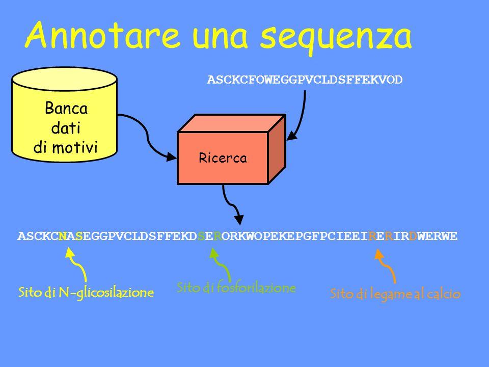 Annotare una sequenza Banca dati di motivi Ricerca ASCKCFOWEGGPVCLDSFFEKVOD ASCKCNASEGGPVCLDSFFEKDSERORKWOPEKEPGFPCIEEIRERIRDWERWE Sito di N-glicosilazione Sito di legame al calcio Sito di fosforilazione