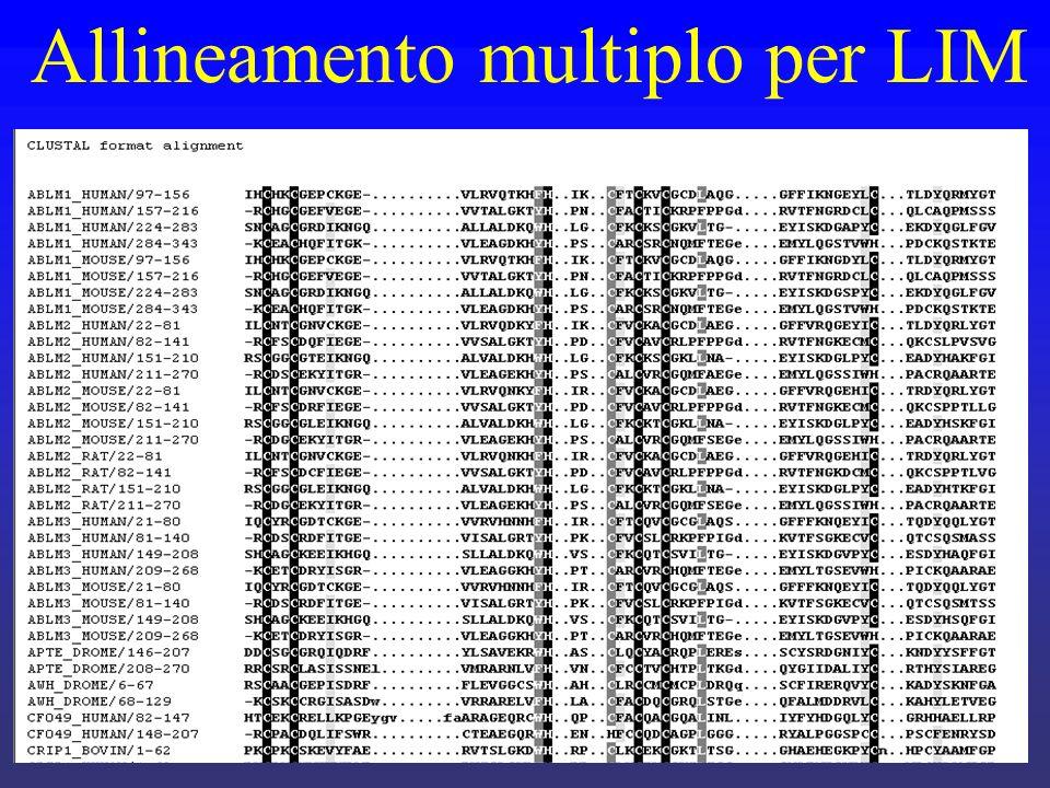 Allineamento multiplo per LIM