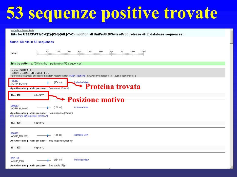 53 sequenze positive trovate Proteina trovata Posizione motivo