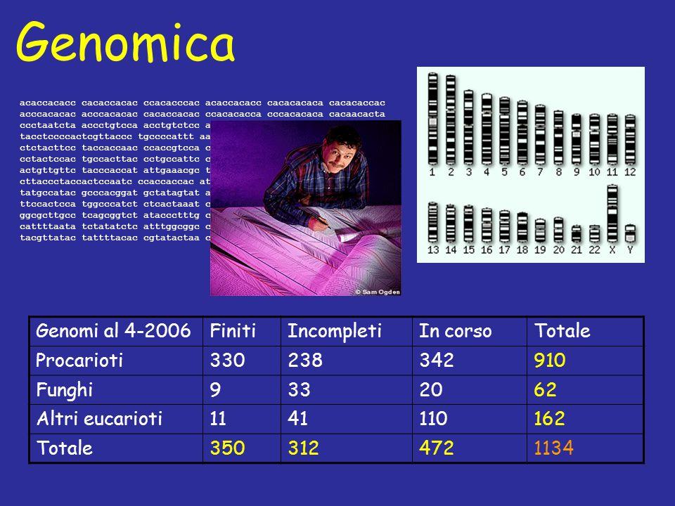 Genomica acaccacacc cacaccacac ccacacccac acaccacacc cacacacaca cacacaccac acccacacac acccacacac cacaccacac ccacacacca cccacacaca cacaacacta ccctaatcta accctgtcca acctgtctcc aaacttaccc tccattacct tacctccccactcgttaccc tgccccattt aaccatacca cagcgaacca cgatccacat ctctacttcc taccaccaac ccaccgtcca ccataaccgt taccctccaa ctacccatat cctactccac tgccacttac cctgccattc ctctaccatc catcatctgg tactcactat actgttgttc tacccaccat attgaaacgc taacaaatga tcgtaaataa tacacatata cttaccctaccactccaatc ccaccaccac atgccatact caccttcact tgtatattga tatgccatac gcccacggat gctatagtat ataccatctc aaacttaccc tactttcaca ttccactcca tggcccatct ctcactaaat cagtaaatat gcacccacat cattatgcac ggcgcttgcc tcagcggtct ataccctttg ccatttaccc ataaattcca tgattatcta cattttaata tctatatctc atttggcggc ccaaaatatt gtataactgc ccttaataca tacgttatac tattttacac cgtatactaa ccactcaatt tatatacact tatgtcaatg t Genomi al 4-2006FinitiIncompletiIn corsoTotale Procarioti330238342910 Funghi9332062 Altri eucarioti1141110162 Totale3503124721134