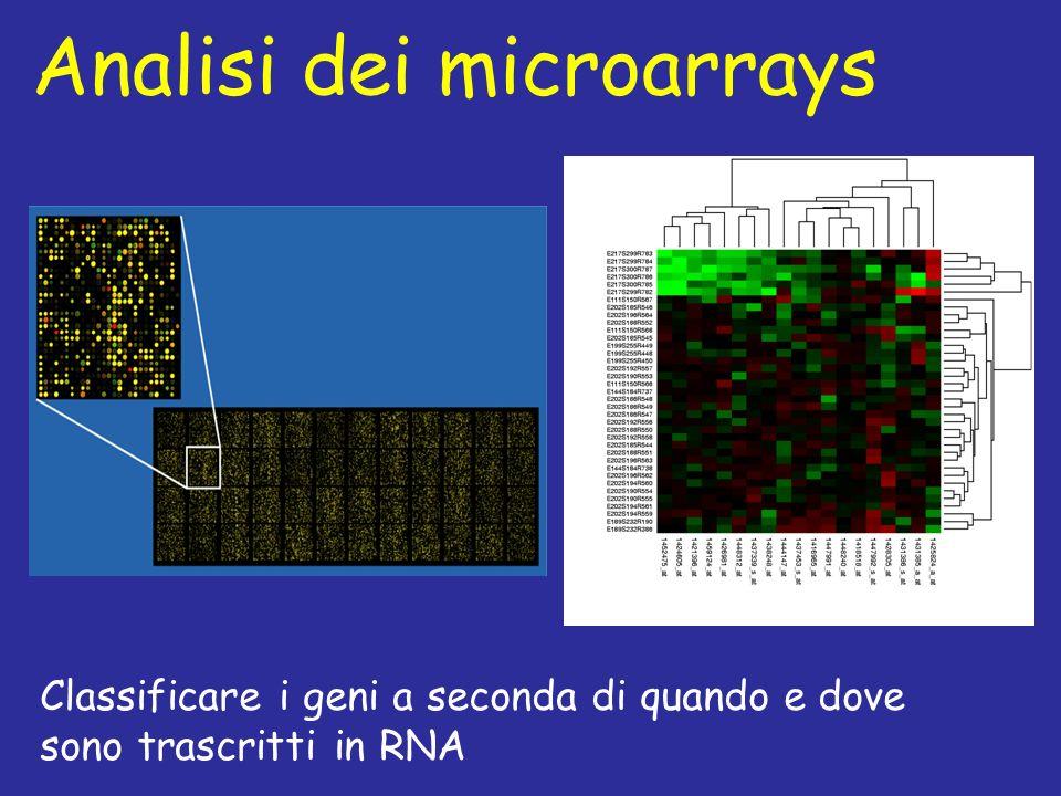 Analisi dei microarrays Classificare i geni a seconda di quando e dove sono trascritti in RNA
