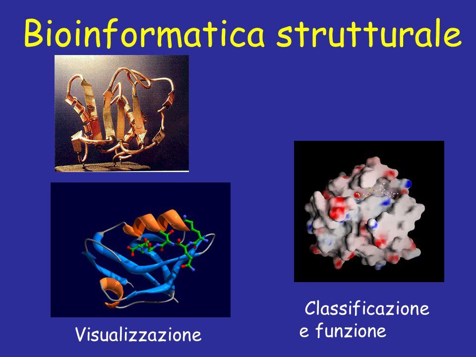 Bioinformatica strutturale Visualizzazione Classificazione e funzione