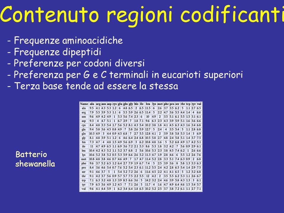 Contenuto regioni codificanti Batterio shewanella - Frequenze aminoacidiche - Frequenze dipeptidi - Preferenze per codoni diversi - Preferenza per G e C terminali in eucarioti superiori - Terza base tende ad essere la stessa