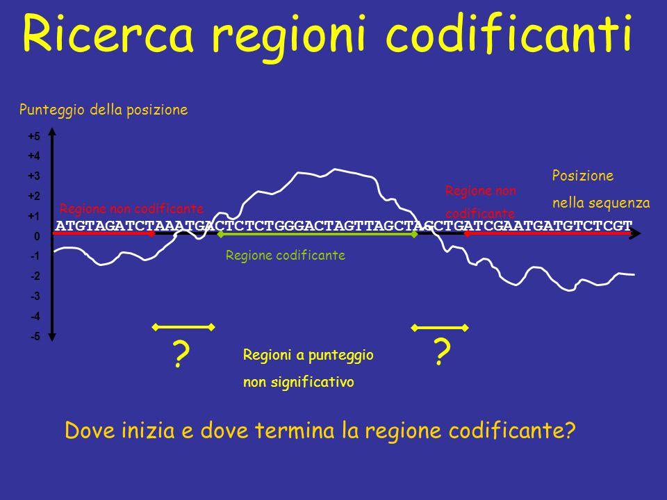 Ricerca regioni codificanti +5 +4 +3 +2 +1 0 -2 -3 -4 -5 Posizione nella sequenza Punteggio della posizione Regione non codificante Regione codificante Regione non codificante .