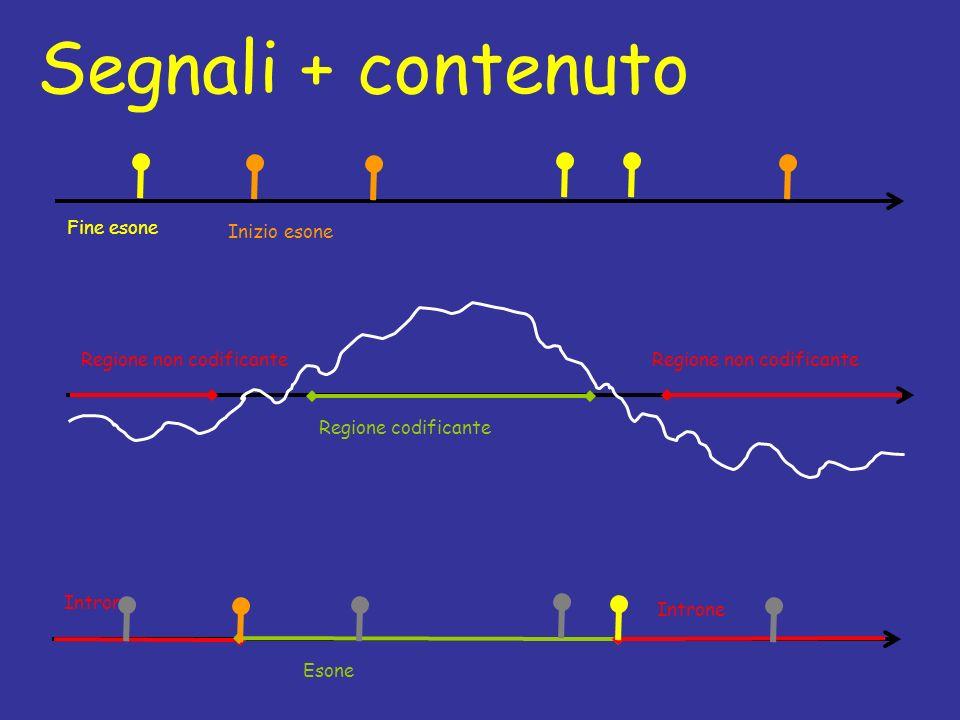 Segnali + contenuto Introne Esone Introne Fine esone Inizio esone Regione non codificante Regione codificante Regione non codificante