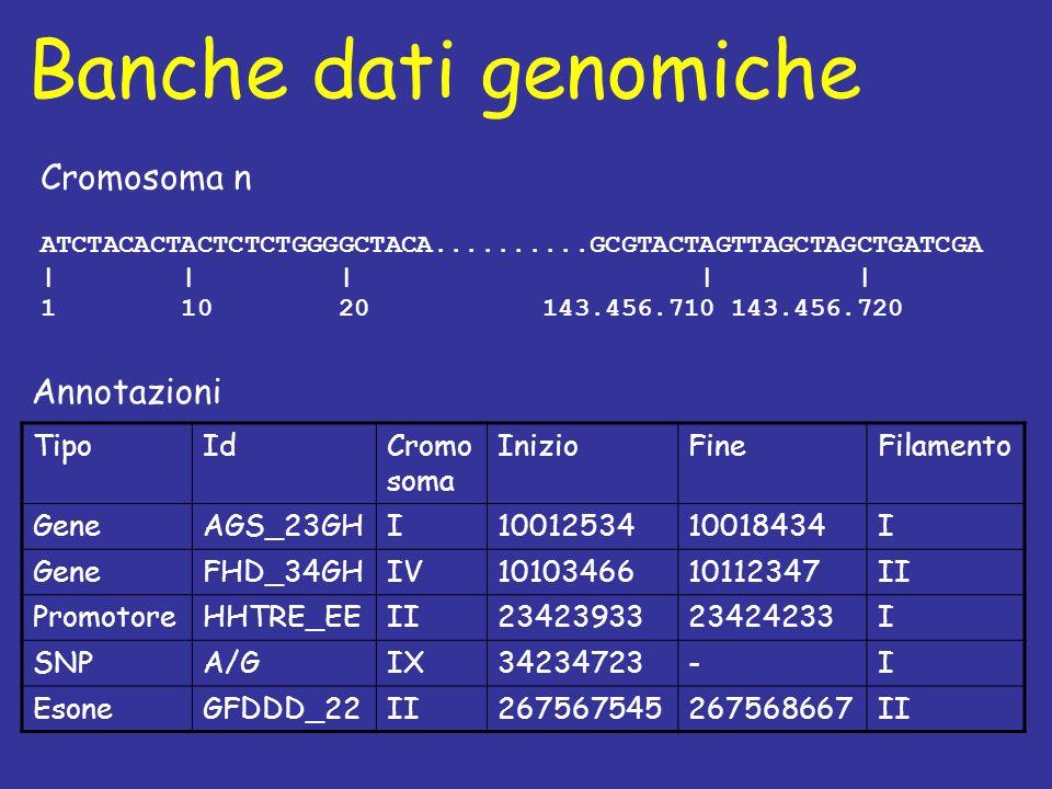 Banche dati genomiche Cromosoma n ATCTACACTACTCTCTGGGGCTACA..........GCGTACTAGTTAGCTAGCTGATCGA | | | | | 1 10 20 143.456.710 143.456.720 TipoIdCromo soma InizioFineFilamento GeneAGS_23GHI1001253410018434I GeneFHD_34GHIV1010346610112347II PromotoreHHTRE_EEII2342393323424233I SNPA/GIX34234723-I EsoneGFDDD_22II267567545267568667II Annotazioni