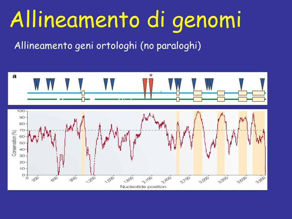 Allineamento di genomi Allineamento geni ortologhi (no paraloghi)