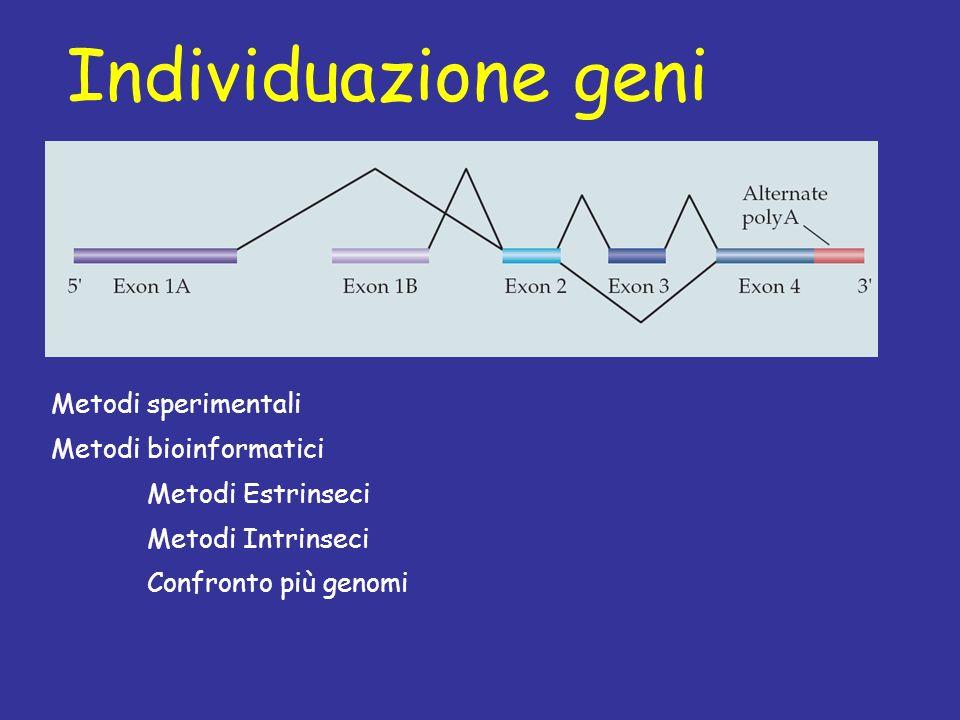 Individuazione geni Metodi sperimentali Metodi bioinformatici Metodi Estrinseci Metodi Intrinseci Confronto più genomi