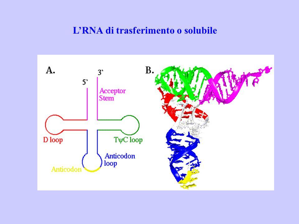 LRNA di trasferimento o solubile