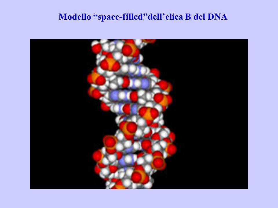 Lutilizzo (industriale) degli acidi nucleici risiede nella loro funzione di banca dei geni.