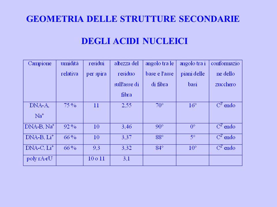 GEOMETRIA DELLE STRUTTURE SECONDARIE DEGLI ACIDI NUCLEICI