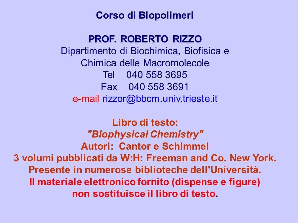 Corso di Biopolimeri PROF. ROBERTO RIZZO Dipartimento di Biochimica, Biofisica e Chimica delle Macromolecole Tel 040 558 3695 Fax 040 558 3691 e-mail