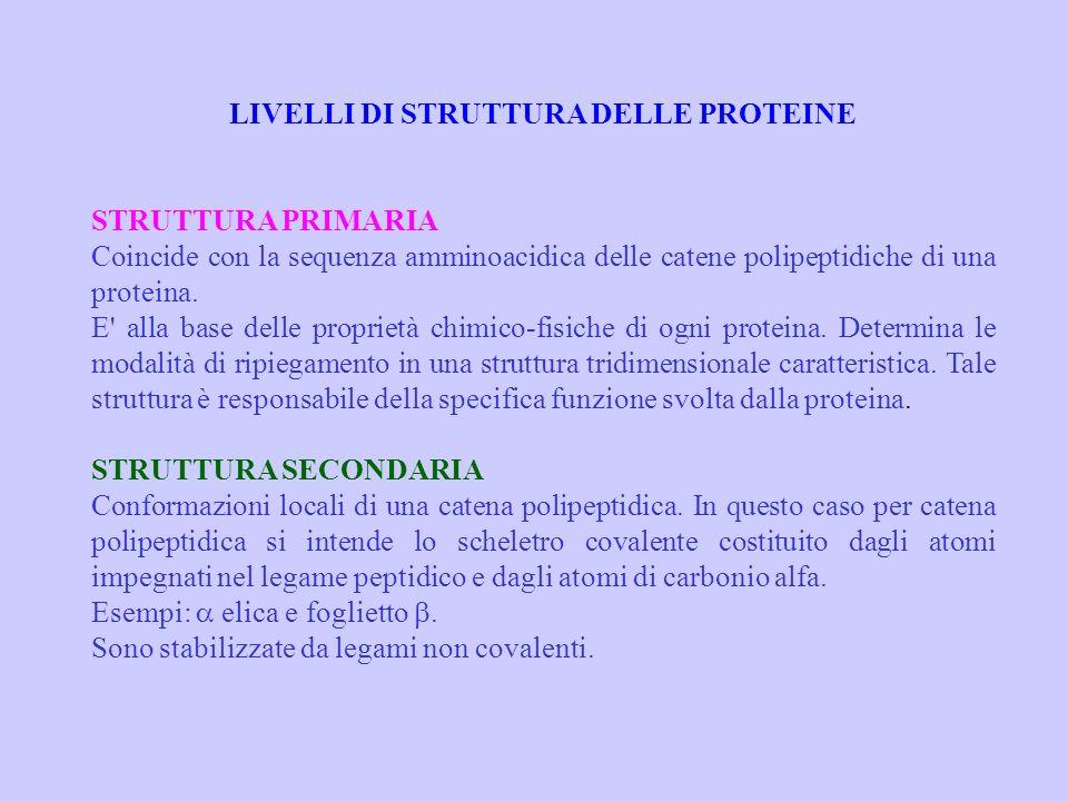 LIVELLI DI STRUTTURA DELLE PROTEINE STRUTTURA PRIMARIA Coincide con la sequenza amminoacidica delle catene polipeptidiche di una proteina. E' alla bas