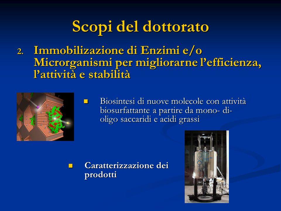 Scopi del dottorato 2. Immobilizazione di Enzimi e/o Microrganismi per migliorarne lefficienza, lattività e stabilità Caratterizzazione dei prodotti C